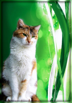 Happy Green Furry Friday :) - image gratuit #323637