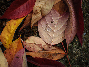 Autumn leaves and droplet II - image #323867 gratis