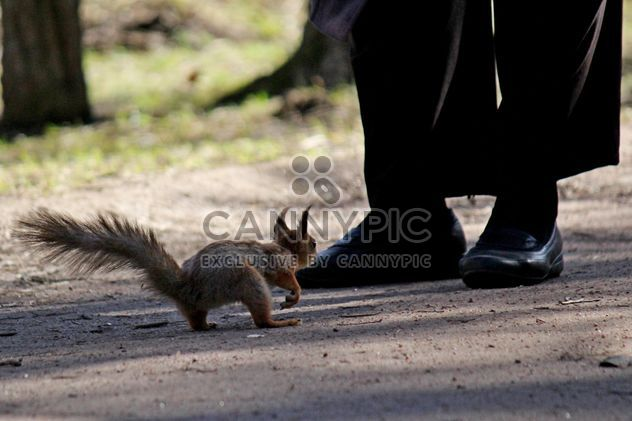 Squirrel and a pedestrian - Free image #326557