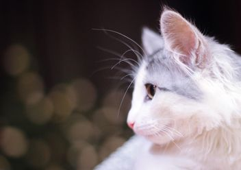 White cat portrait - image #327827 gratis