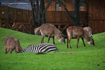 deer grazing on the grass - image #328087 gratis