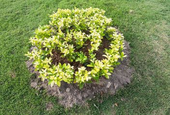 Small flowerbed in park - image gratuit #328437