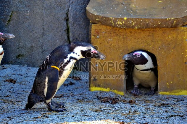 Couple of penguins - Kostenloses image #328507