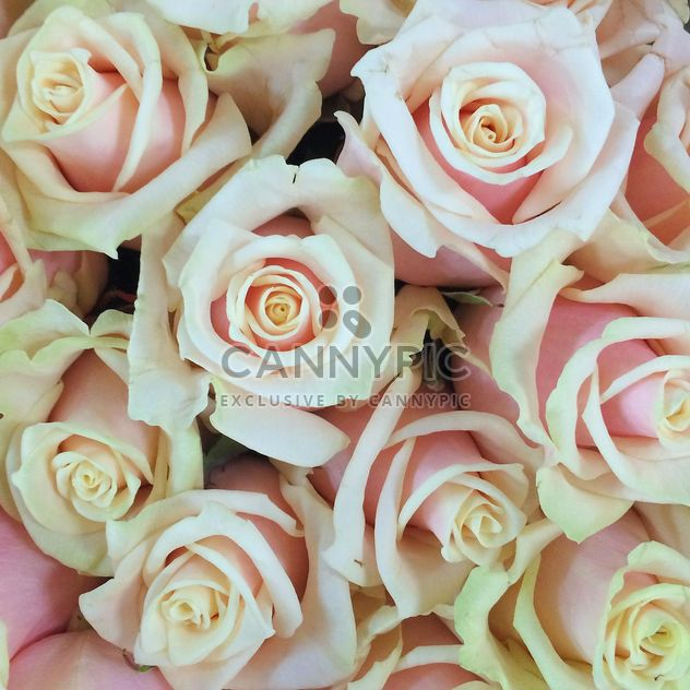 bouquet beige rose - Free image #329267