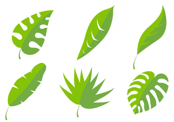 Palm Leaf Vectors - Free vector #329417