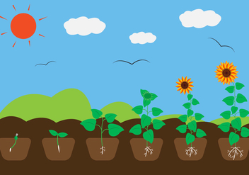 Plant Growth Cycle in Vector - vector #329427 gratis