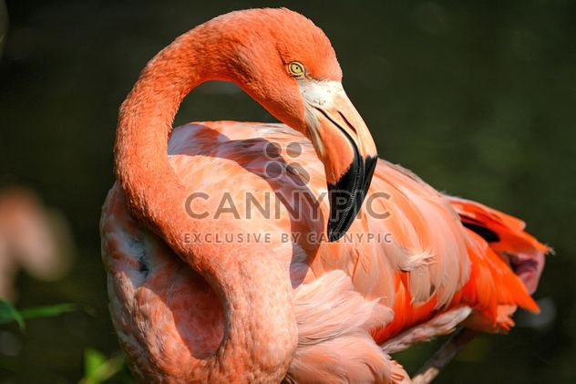 Flamingo in park - Free image #329927
