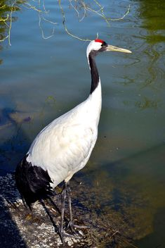 Crane in pond in a park - Free image #330297