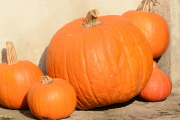 Orange Pumpkins - image #330447 gratis