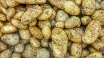 Pile of potatoes texture - Free image #330687