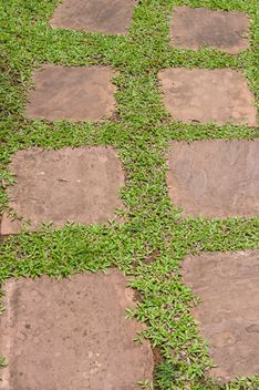 Foliage on pavement - Free image #330967