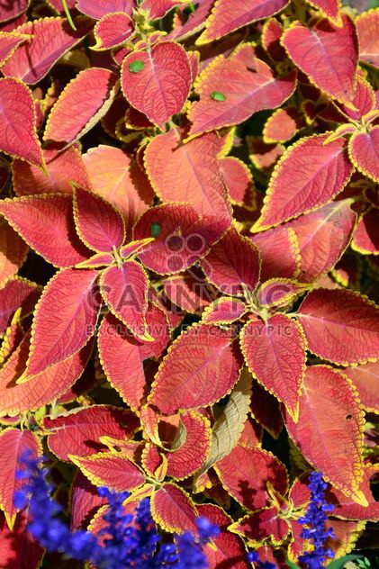 Autumn foliage - Free image #330977