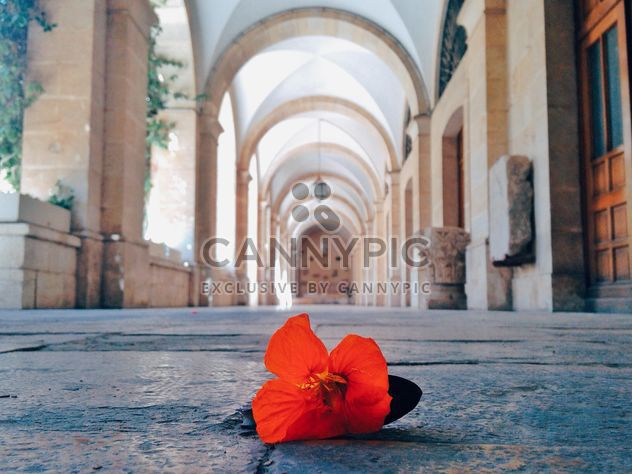 red flower on the floor close up - Free image #332837