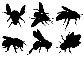 Free Bee Silhouette Vector - Free vector #333487