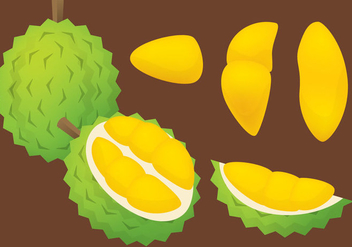 Durian Vector - Free vector #336237