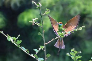 Kingfisher bird on tree - image #337467 gratis