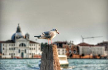 Seagull on wooden pillar - image #337477 gratis