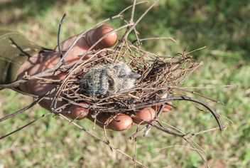 Nest with nestling in hand - image #337527 gratis