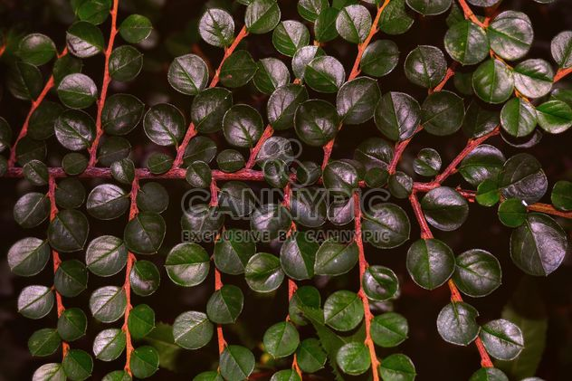 Branch with green leaves - Free image #338327