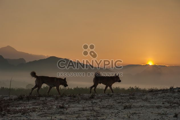 Two dogs at sunset - бесплатный image #338587