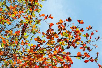 Colorful leaves on tree branches - image #338607 gratis