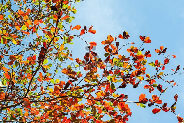 Colorful leaves on tree branches - Free image #338607