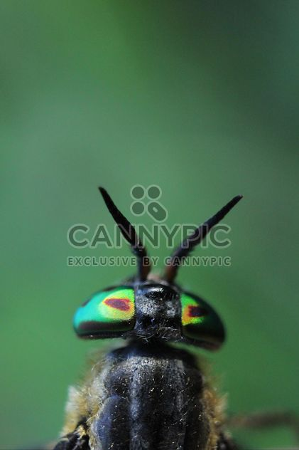 Insect on green background - Free image #338617