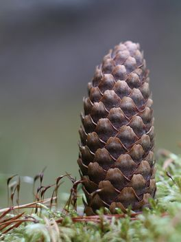 Closeup of pine cone - Free image #339177
