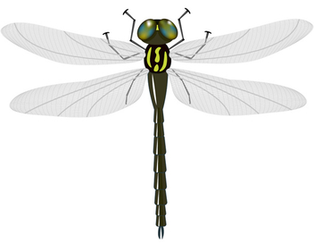Vector Dragonfly - Free vector #340227