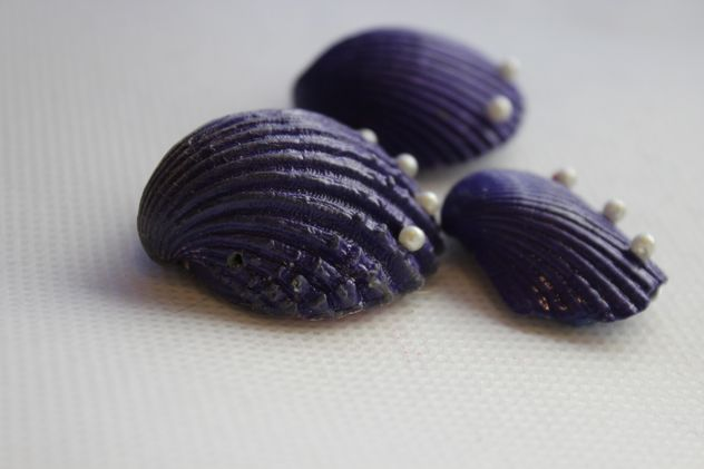 Violet shells on white background - бесплатный image #341467