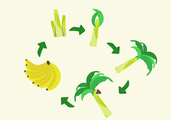 FREE BANANA LIFE CYCLE VECTOR - Free vector #342367