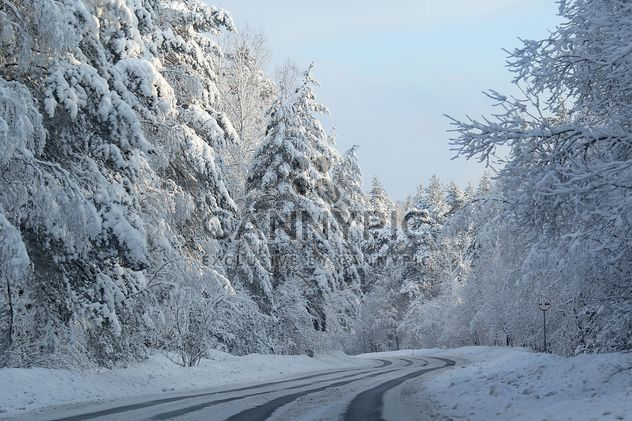 Winter landscape, Priozersk district, Russia - Kostenloses image #343627