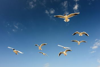 Sea gulls flying in the blue sunny sky over the coast of Baltic Sea - image #344007 gratis