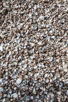 Sea shell texture - Free image #344107