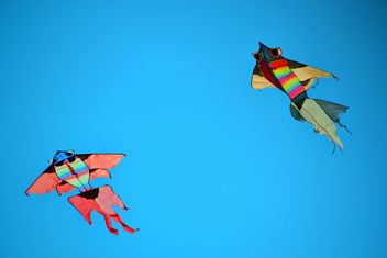 kites in the blue sky - image gratuit #344207