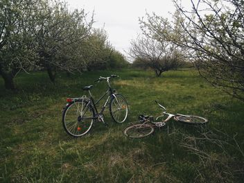 Two bikes on green grass in park - бесплатный image #344617