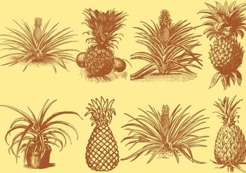 Old Style Drawing Ananas - vector #345257 gratis