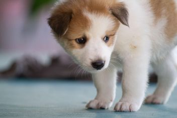 Portrait of adorable white puppy - image gratuit #346197