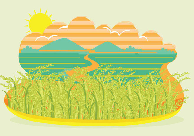Rice Field Landscape Vector - Free vector #347537