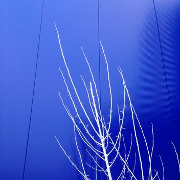 White trees on background of blue building - бесплатный image #347817