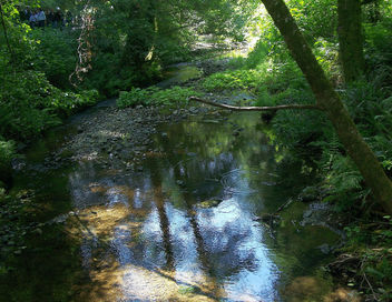 USA (San Francisco, CA) Muir Woods creek - Free image #349247