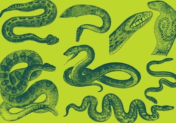 Old Style Drawing Snake Vectors - vector gratuit #349967