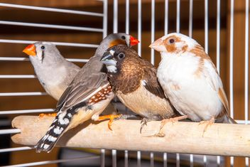 Sparrow and zebra finches - Free image #350247