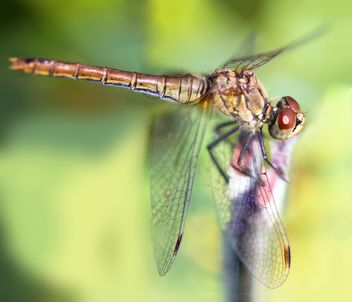 Close-up of dragonfly on twig - image #350267 gratis