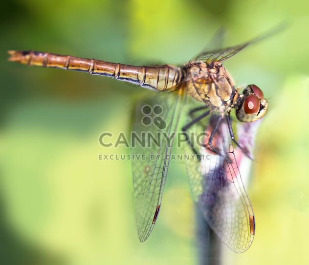 Close-up of dragonfly on twig - Free image #350267