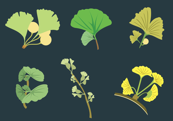 Ginko Leaves Vector - vector gratuit #350327