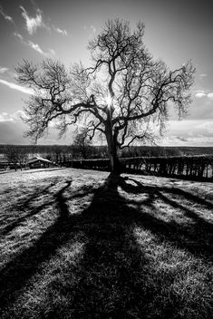 The Tree - Newgrange, Ireland - Landscape Photography - Free image #350827