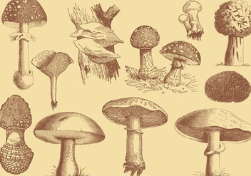 Old Style Mushroom and Truffles Vector Drawings - vector gratuit #351817