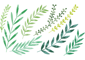 Vector Watercolor Leaves - vector gratuit #359247