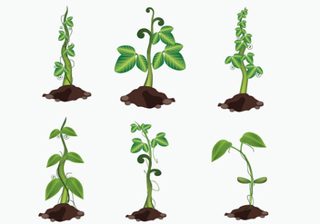Growing Beanstalk Vector - vector gratuit #363087